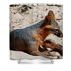 Shower Curtain featuring the photograph Foxie by Debra Forand