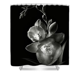 Freesia In Black And White Shower Curtain