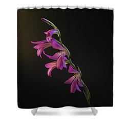 Freesia In The Spotlight Shower Curtain by Susan Rovira