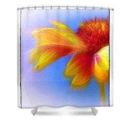 Shower Curtain featuring the photograph Fresh As A Daisy by Judi Bagwell