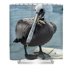 Shower Curtain featuring the photograph Friendly Pelican by Carla Parris