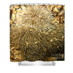 Frilled Sea Anemone Shower Curtain by Paul Ward