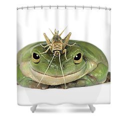 Frog And Grasshopper Shower Curtain by Darwin Wiggett