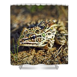 Frog Shower Curtain by Elena Elisseeva