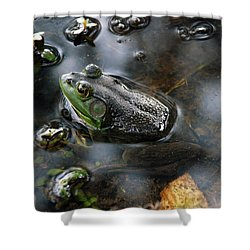 Frog In The Millpond Shower Curtain by Kay Lovingood