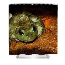 Frog Love Shower Curtain by LeeAnn McLaneGoetz McLaneGoetzStudioLLCcom