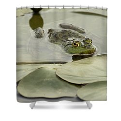 Frog On Lily Pads  Shower Curtain