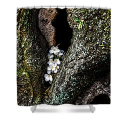 From The Heart Shower Curtain by Christopher Holmes