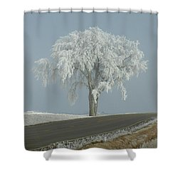 Shower Curtain featuring the photograph Frost On The Big Tree  by Penny Meyers