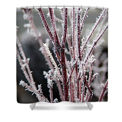 Frosty Coral Maple Shower Curtain by Mick Anderson