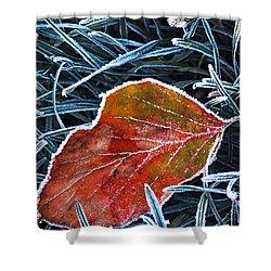 Frosty Leaf Shower Curtain by Elena Elisseeva
