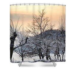 Frozen Trees Shower Curtain by Mats Silvan