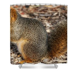 Shower Curtain featuring the photograph Fruity Squirel by Elizabeth Winter