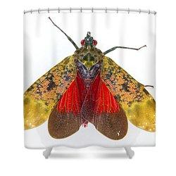 Fulgorid Planthopper Costa Rica Shower Curtain by Piotr Naskrecki