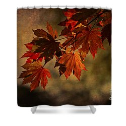 Shower Curtain featuring the photograph Full Moon Maple by Clare Bambers