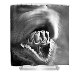 Funny Camel Shower Curtain by Heiko Koehrer-Wagner
