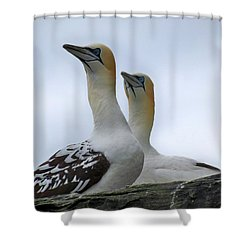 Shower Curtain featuring the photograph Gannets by Lynn Bolt