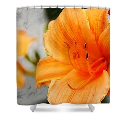 Shower Curtain featuring the photograph Garden Lily by Davandra Cribbie