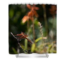 Shower Curtain featuring the photograph Garden Orange  by Priya Ghose