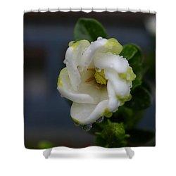 Gardenia Raindrops Shower Curtain
