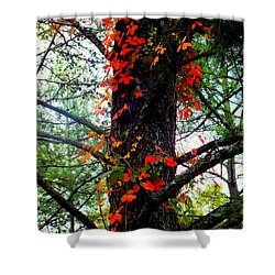 Garland Of Autumn Shower Curtain by Karen Wiles