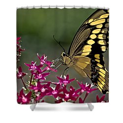 Gentle Giant Shower Curtain by DigiArt Diaries by Vicky B Fuller