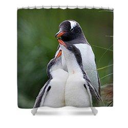 Gentoo Penguin Pygoscelis Papua Hungry Shower Curtain by Suzi Eszterhas