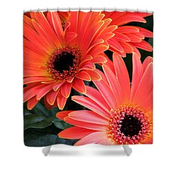 Gerbera Bliss Shower Curtain by Rory Sagner