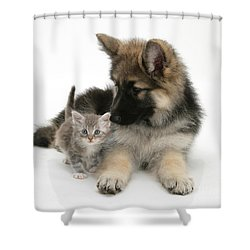 German Shepherd Dog Pup With A Tabby Shower Curtain by Mark Taylor