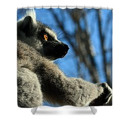 Get Ready Here I Come Shower Curtain by Sandi OReilly