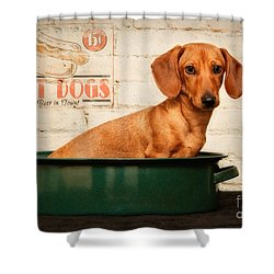 Get Your Hot Dogs Shower Curtain by Susan Candelario