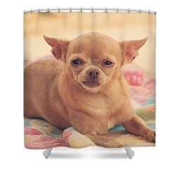 Getting Sleepy Shower Curtain by Laurie Search