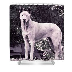 Shower Curtain featuring the photograph Ghost The Wolf by Maria Urso