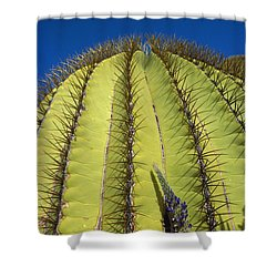 Giant Barrel Cactus Ferocactus Diguetii Shower Curtain by Tui De Roy
