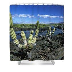 Giant Candelabra Cactus Jasminocereus Shower Curtain by Winfried Wisniewski