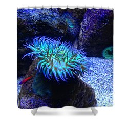 Giant Green Sea Anemone Shower Curtain by Mariola Bitner