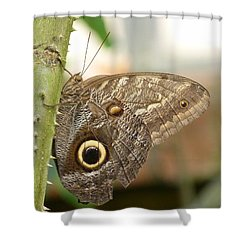 Shower Curtain featuring the photograph Giant Owl Butterfly by Lynn Bolt