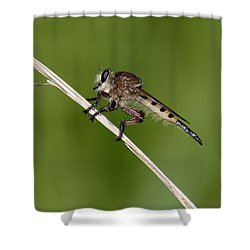 Giant Robber Fly - Promachus Hinei Shower Curtain