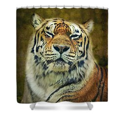 Give Me Your Tender Look Shower Curtain by Aimelle