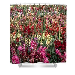 Gladioli Garden In Early Fall Shower Curtain by Yva Momatiuk and John Eastcott and Photo Researchers