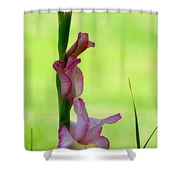 Shower Curtain featuring the photograph Gladiolus Blossoms by Ed Gleichman