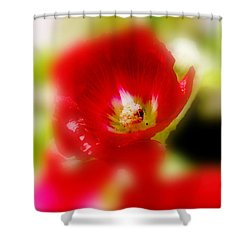 Gladiolus Shower Curtain by Toni Hopper