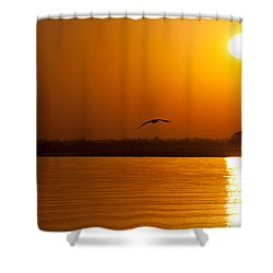 Glides Into Evening Shower Curtain by Karol Livote