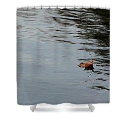Gliding Across The Pond Shower Curtain by LeeAnn McLaneGoetz McLaneGoetzStudioLLCcom