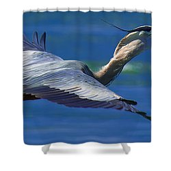 Gliding Great Blue Heron Shower Curtain