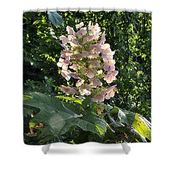 Shower Curtain featuring the photograph Glorious Day by Nava Thompson