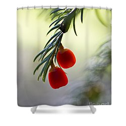 Shower Curtain featuring the photograph Glowing Berries. by Clare Bambers