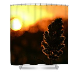 Glowing Leaf Shower Curtain by Zawhaus Photography