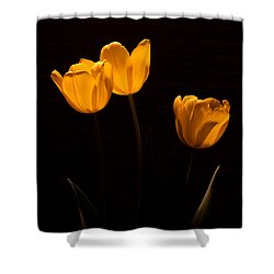 Shower Curtain featuring the photograph Glowing Tulips by Ed Gleichman