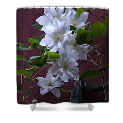 Glowing White Clematis Shower Curtain